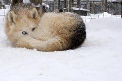 De wintersprookjesland van Lapland Stock Fotografie