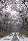 De wintersteeg tussen de bevroren bomen royalty-vrije stock foto's