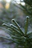 De winterstemming… Stock Afbeelding
