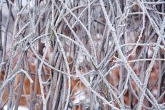 De winterstemming Royalty-vrije Stock Fotografie