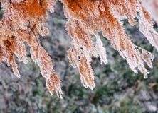 De winterstemming Royalty-vrije Stock Foto's