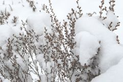 De winterstemming Sneeuw behandelde takken in de winter stock foto's
