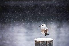 De winterstilte Royalty-vrije Stock Fotografie