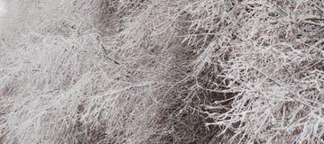 De winterstructuur in de aard Stock Foto's