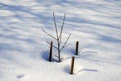 De wintertak van een pruimboom Royalty-vrije Stock Foto's