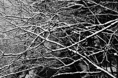 De wintertakken Stock Afbeeldingen