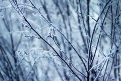 De wintertakken in het bos Royalty-vrije Stock Fotografie