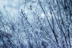 De wintertakken in het bos Royalty-vrije Stock Foto