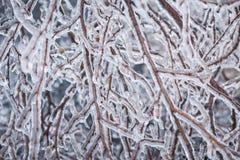 De wintertakken in ijs Stock Afbeeldingen