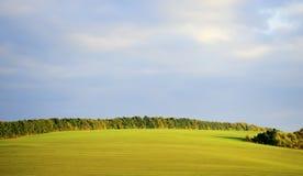 De wintertarwe van het gebied Stock Foto