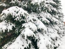 De wintertextuur met Kerstbomen met feestelijke takken behandeld met een dikke laag van witte koude glanzende pluizige sneeuw Ach stock fotografie