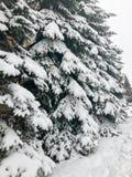 De wintertextuur met Kerstbomen met feestelijke takken behandeld met een dikke laag van witte koude glanzende pluizige sneeuw Ach stock afbeelding