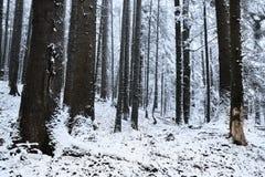 De wintertijd binnen het bos op een nevelige dag Stock Afbeeldingen