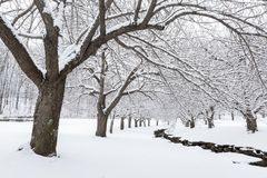 De wintertijd in Hurd Park, Dover, NJ Stock Foto's