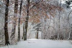 De wintertijd in stadspark royalty-vrije stock fotografie