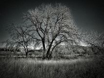 De wintertribune van Bomen bij het Park van de Staat van Meerpueblo Royalty-vrije Stock Foto's