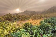 De wintervegetatie en lege padieveld afer oogst in Vietnam stock afbeelding