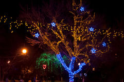 De winterverlichting in een park Stock Afbeelding