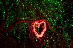 De winterverlichting in een park Royalty-vrije Stock Afbeelding