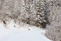 De wintervoetpad stock foto's