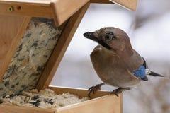De wintervogel het voeden Stock Afbeeldingen