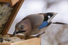 De wintervogel het voeden Stock Foto