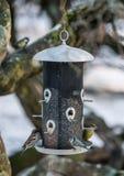 De wintervogels Stock Fotografie