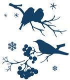 De wintervogels die op tak van boom zitten Royalty-vrije Stock Afbeelding