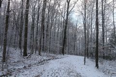 De wintervoorproef Stock Afbeeldingen