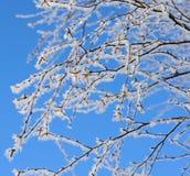 De wintervorst bij takken Stock Afbeelding