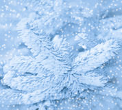 De wintervorst op net gestemd boomclose-up, zwart-wit. Stock Afbeelding