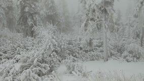 De winterweg in de Tsjechische Republiek stock videobeelden