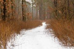 De winterweg door een bos met sneeuw wordt behandeld die royalty-vrije stock afbeeldingen