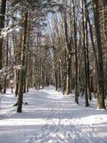 De winterweg door het bos Stock Foto