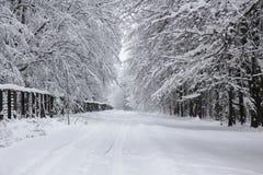 De winterweg door het hout royalty-vrije stock afbeeldingen