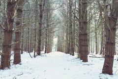 De winterweg door het Hout Stock Foto's