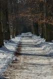 De winterweg in een bos royalty-vrije stock fotografie