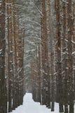 De winterweg in een pijnboombos royalty-vrije stock foto's
