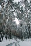 De winterweg en bos royalty-vrije stock foto's