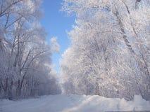 De winterweg in het dorp Stock Fotografie