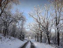De winterweg in hout Stock Afbeelding