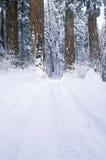 De winterweg in Sequoia Nationaal Park, Californië Stock Foto's
