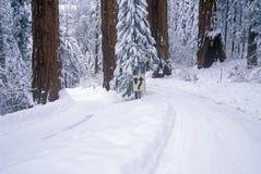 De winterweg in Sequoia Nationaal Park, Californië stock afbeeldingen