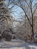 De winterweg van sneeuw onder de bomen op een duidelijke zonnige dag wordt ontruimd die Royalty-vrije Stock Foto's