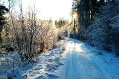 De winterweg in zon stock fotografie