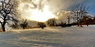 De winterwind stock foto's