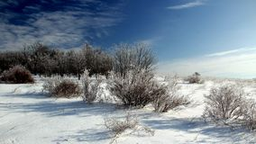 De winterwoestijn Stock Fotografie