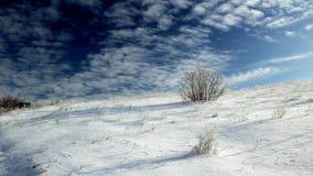 De winterwoestijn Stock Foto