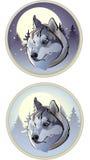 De winterwolf stock illustratie