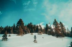 De winterwonder Stock Foto's